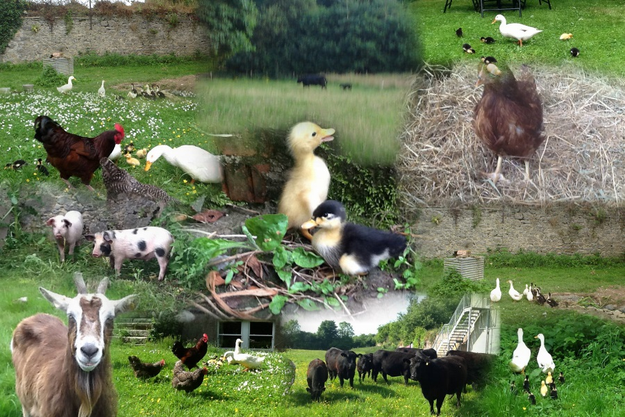 Burton-Park-Animals_AutoCollage_12_Images