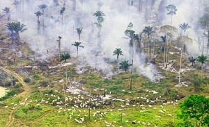 burning-the-amazon-to-make-cattle-grazing-grounds