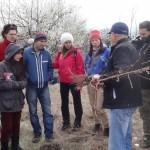 Подрязване на корените и клонките на фиданката